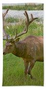 Elk At Pond Edge Beach Towel