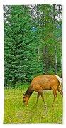 Elk Near Wapiti Campground In Jasper Np-alberta Beach Towel
