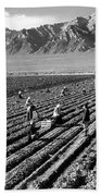 Farm Workers And Mount Williamson Beach Towel