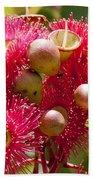 Flowering Gum W Ants Beach Towel