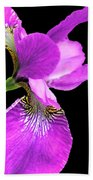 Japanese Iris Violet Black  Beach Towel