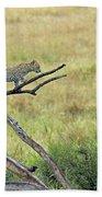 Leopard Cub In Serengeti Beach Towel