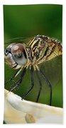 Austrogomphus Dragonfly Beach Towel