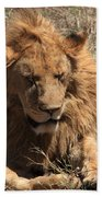 Lions Of The Ngorongoro Crater - Tanzania Beach Towel