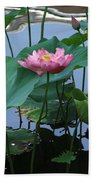 Lotus Flower At Calloway Beach Towel