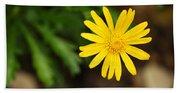 Marguerite Yellow Daisy Beach Towel