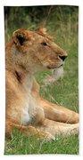 Masai Mara Lioness Beach Towel