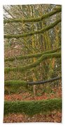 Moss-covered Big Leaf Maple Branches Beach Towel