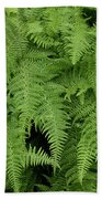 Mountain Ferns Of North Carolina Beach Towel