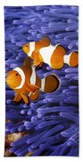Ocellaris Clownfish Beach Towel