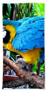 Parrot Greeting Card Beach Towel
