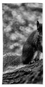 Squirrel In The Park V3 Beach Towel
