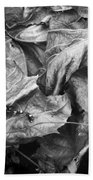 Sycamore Leaves In Autumn Beach Towel