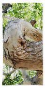 Sycamore Tree's Twisted Trunk Beach Towel