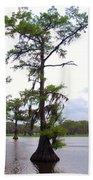 Cypress Trees Beach Towel