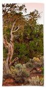 Weathered Tree Sunrise Canyon Dechelly Beach Towel
