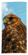 What Are You Looking At Red Shoulder Hawk Beach Towel