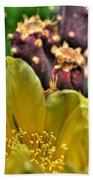 001 For The Cactus Lover In You Buffalo Botanical Gardens Series Beach Towel