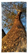 001 Oldest Tree Believed To Be Here In The Q.c. Series Beach Towel
