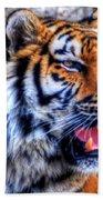 001 Siberian Tiger  Beach Towel