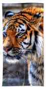 0013 Siberian Tiger Beach Towel