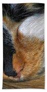 0053 Sleeping Cleo Beach Towel