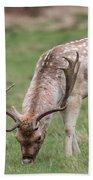 01 Fallow Deer Beach Towel