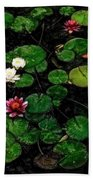 0151-lily - Acanthus Sl Beach Towel