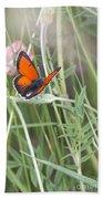 02 Balkan Copper Butterfly Beach Towel