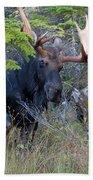 0339 Bull Moose 3 Beach Towel