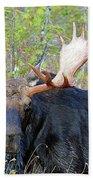 0341 Bull Moose Beach Towel