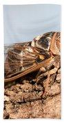 05 New Forest Cicada  Beach Sheet
