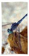 Blue Dragonfly Beach Towel