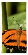 A Banded Orange Heliconian Butterfly Beach Towel