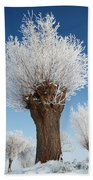 A Frosted Willow On A Very Cold And Bright Winter Day Beach Towel