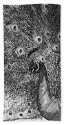 A Peacock's Feathers Beach Towel