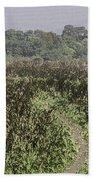 A Small Path Through Very Tall Grass Inside The Okhla Bird Sanctuary Beach Towel