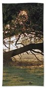 A Tree In Mississippi Beach Towel