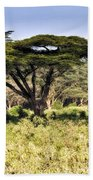 Acacia Trees Beach Towel