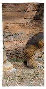 African Lion Couple 3 Beach Towel