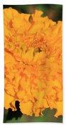 African Marigold Named Crackerjack Gold Beach Towel