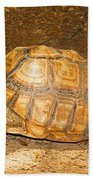 African Spur Thigh Tortoise Beach Towel