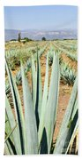 Agave Cactus Field In Mexico Beach Towel by Elena Elisseeva