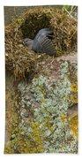 American Dipper In Nest   #1468 Beach Towel