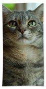 American Shorthair Cat Profile Beach Towel