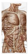 Anatomy Of Human Abdominal Muscles Beach Towel