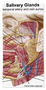 Anatomy Of Human Salivary Glands Beach Towel