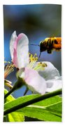 Apple Blossom And Honey Bee Beach Towel