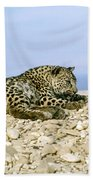 Arabian Leopard Panthera Pardus 1 Beach Towel