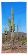 Arizona Desert Beach Sheet